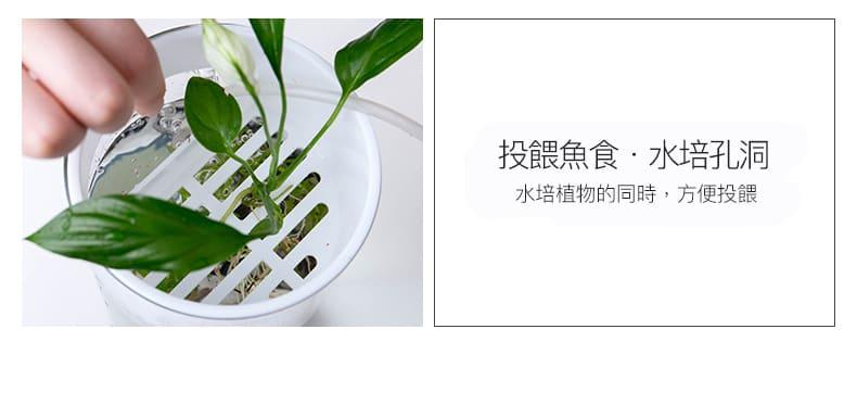 桌面生態 小魚缸 魚菜共生裝置